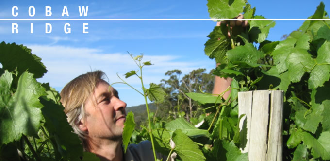 Picture of winemaker Alan Cooper in the vineyard